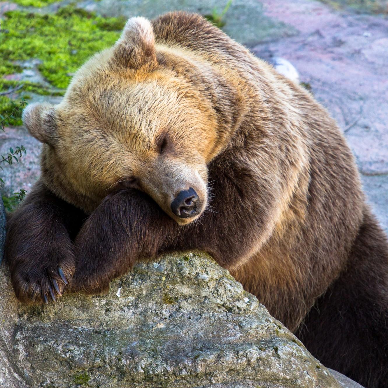 心の病気のための睡眠学コラム─第1回 ウルトラディアンリズムと睡眠障害の新たな研究成果