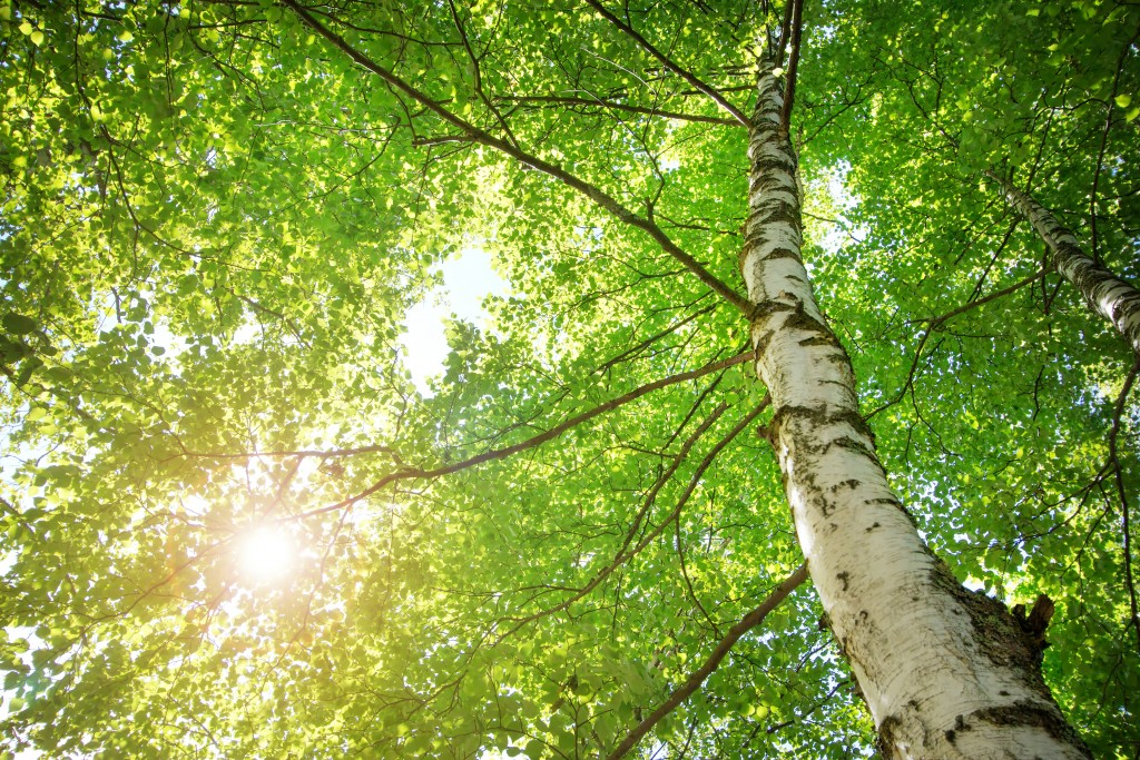 新緑の木々と太陽の木漏れ日