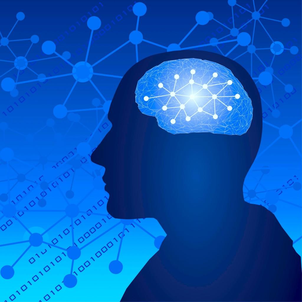 人間の脳と神経回路のつながり