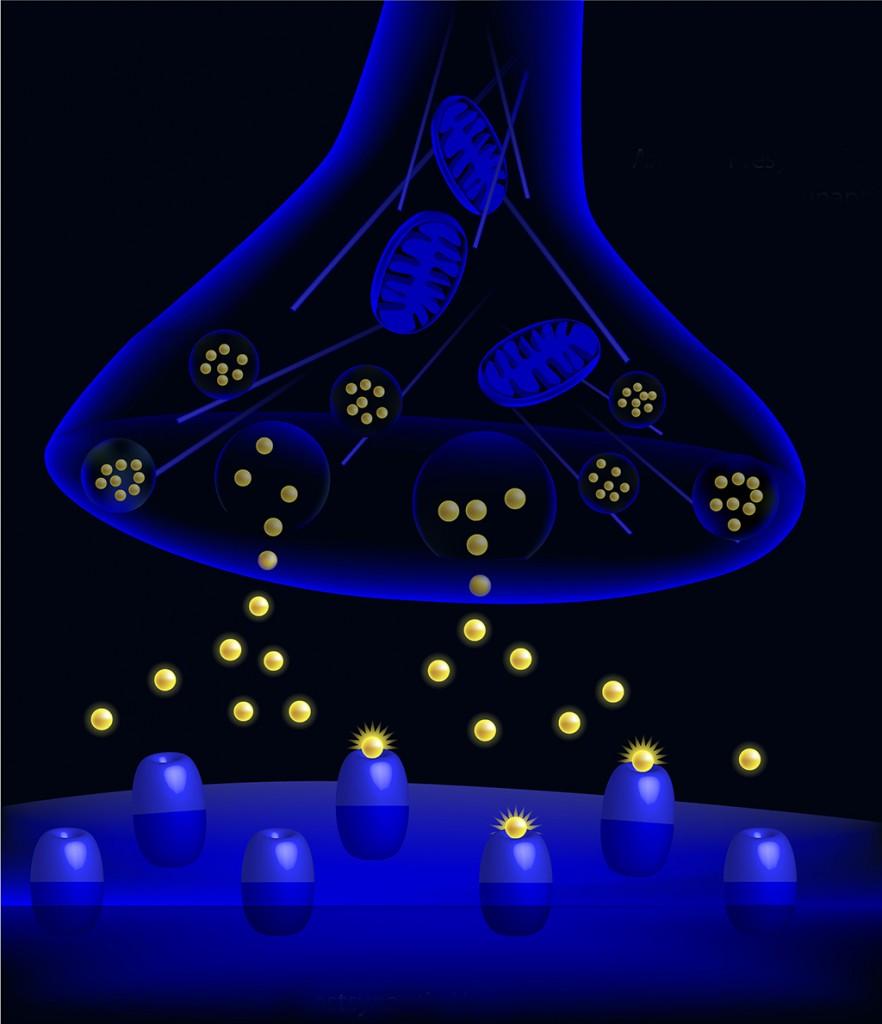 脳内シナプスとレセプターによる神経伝達物質の流れ