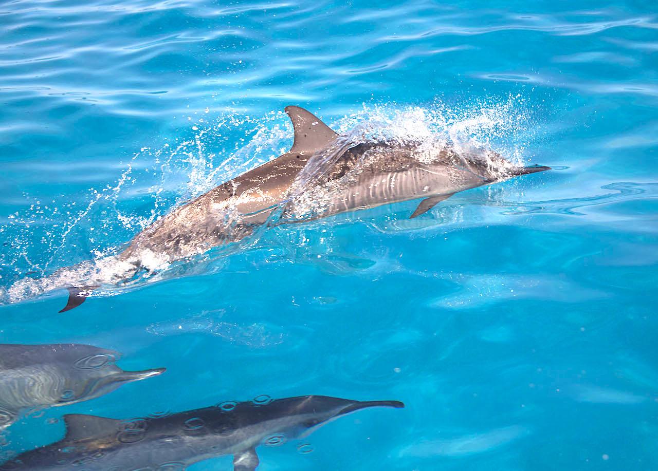 野生イルカと心がつながり、いやされる「ドルフィンスイム」体験