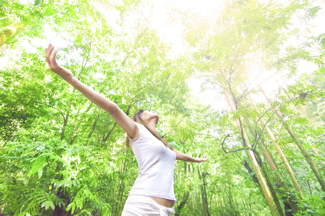 知る人ぞ知る治療法 森の力がこころとからだをいやす「森林セラピー®」