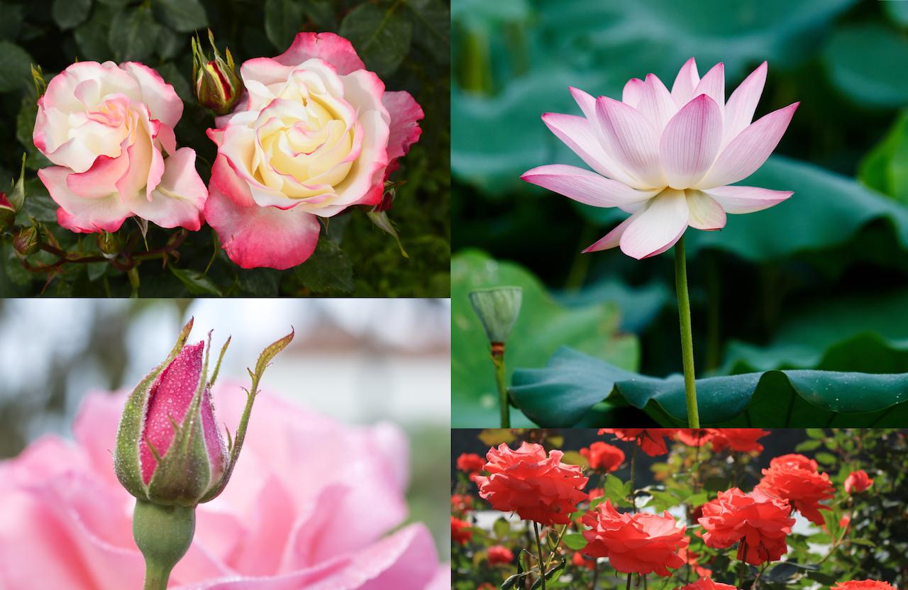花の心理的効用を数値化し、心の癒しに活用する「花セラピー」