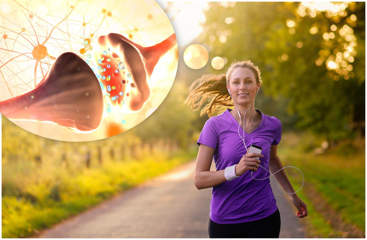 心と運動の関係─2 運動と神経伝達物質