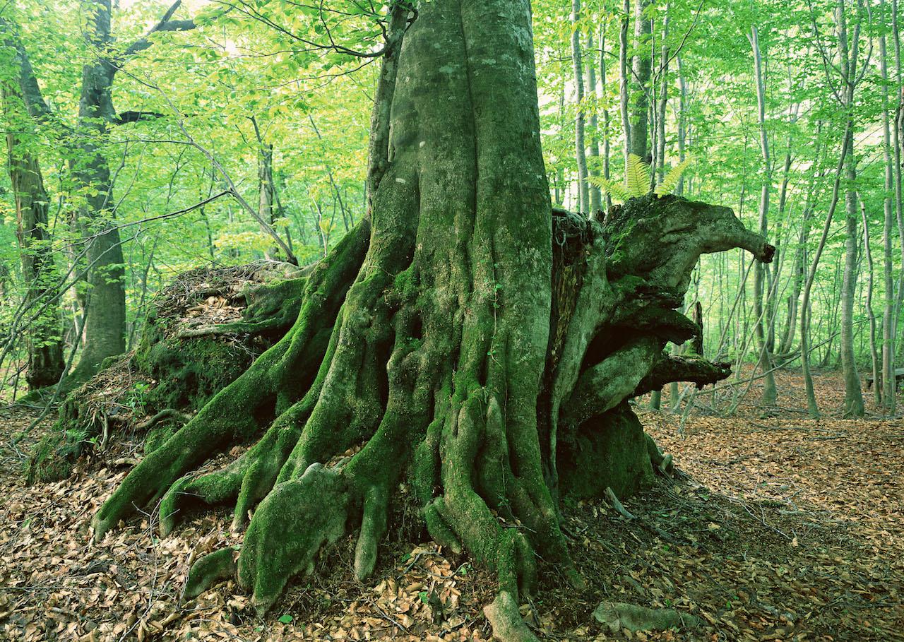 現代社会が失った愛が森の中に・・・!